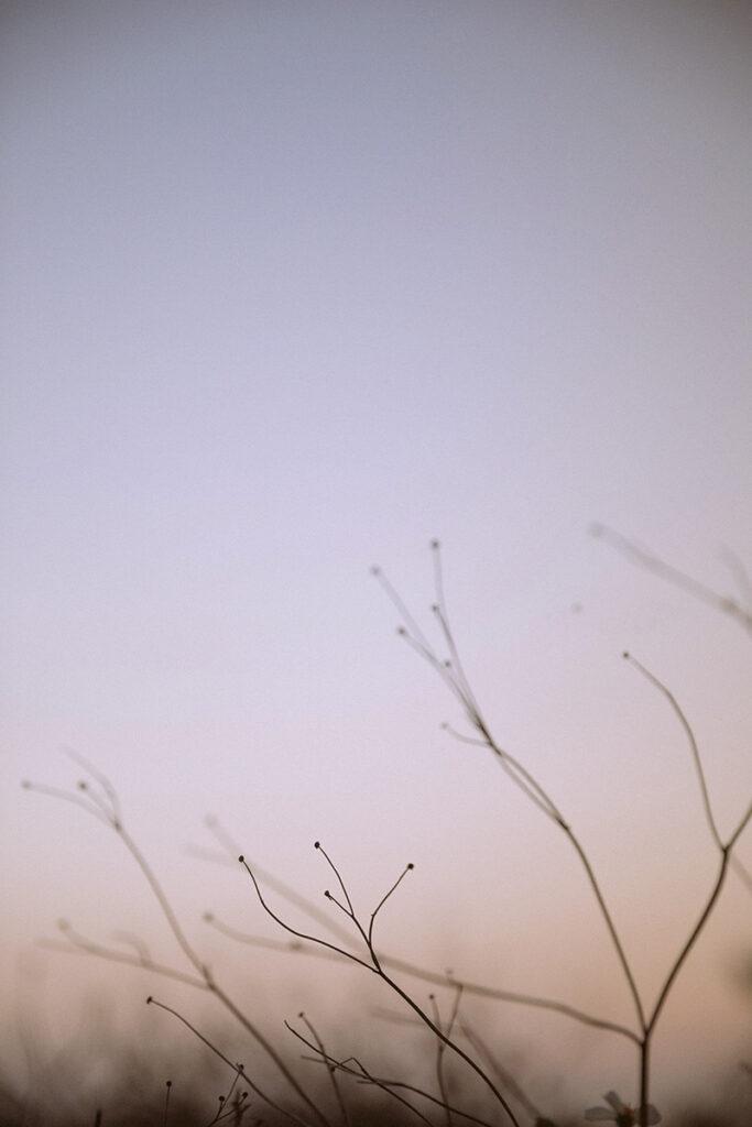 自然風格攝影,自然風格,雙子小姐,生活感